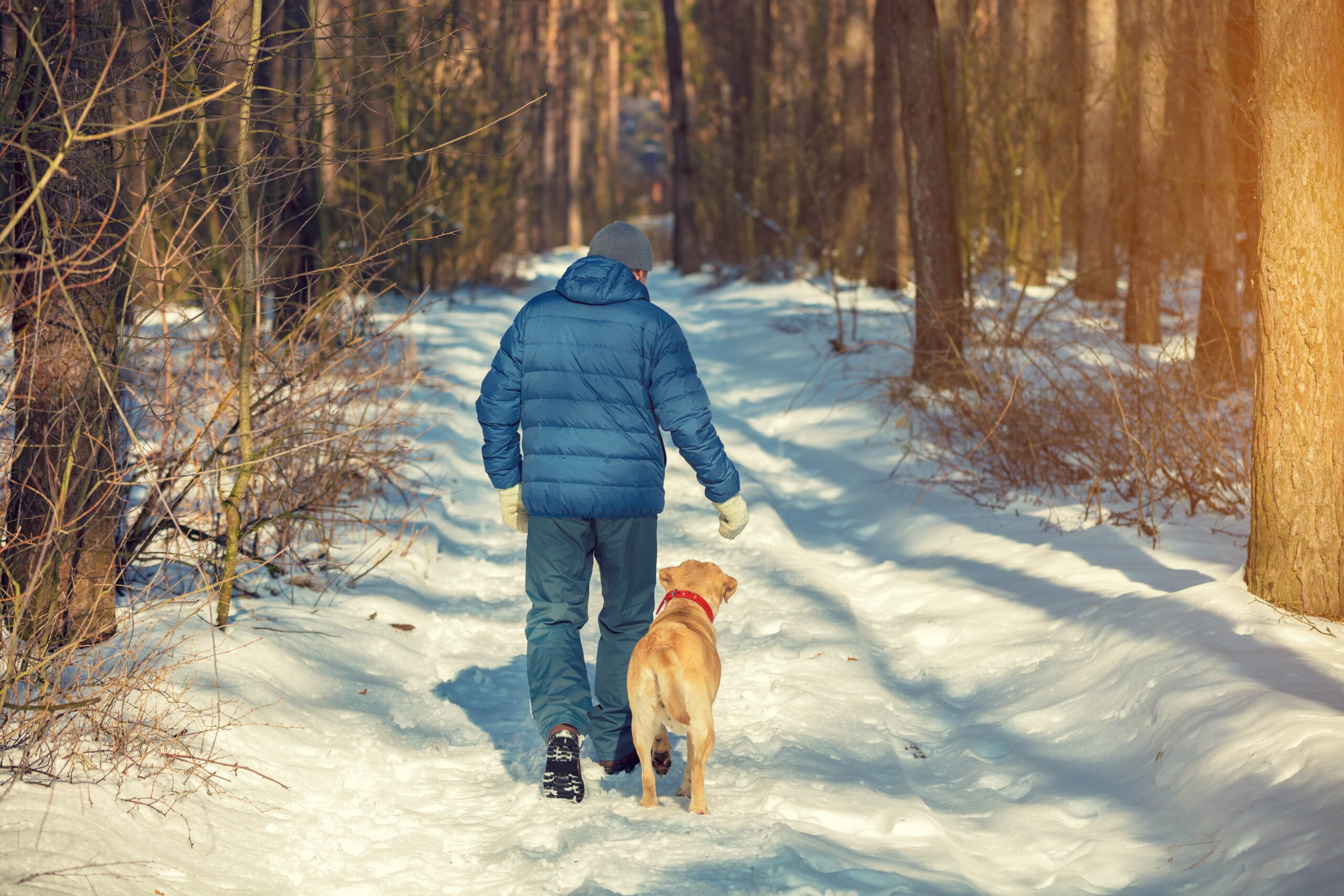 Man walking his dog on a snow covered trail in the forest.