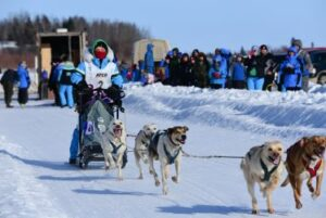 Athlete in the north racing with sled dogs